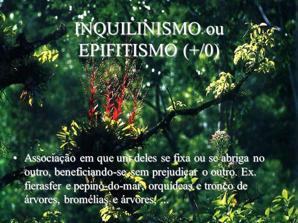 INQUILINISMO ou EPIFITISMO (+/0)