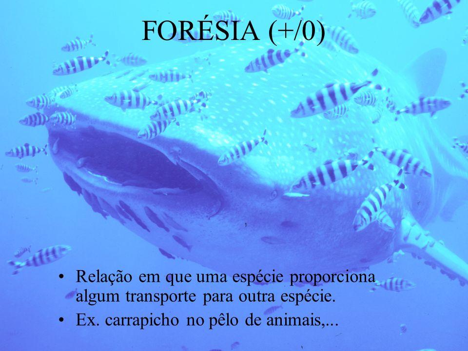 FORÉSIA (+/0) Relação em que uma espécie proporciona algum transporte para outra espécie.
