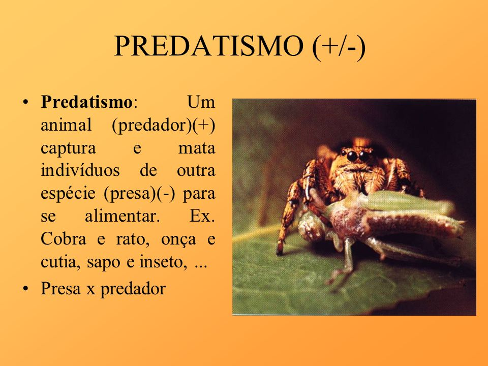PREDATISMO (+/-)