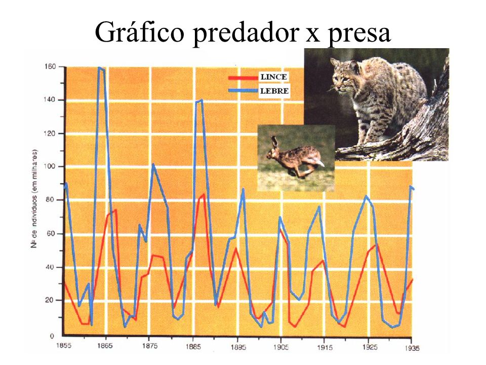 Gráfico predador x presa