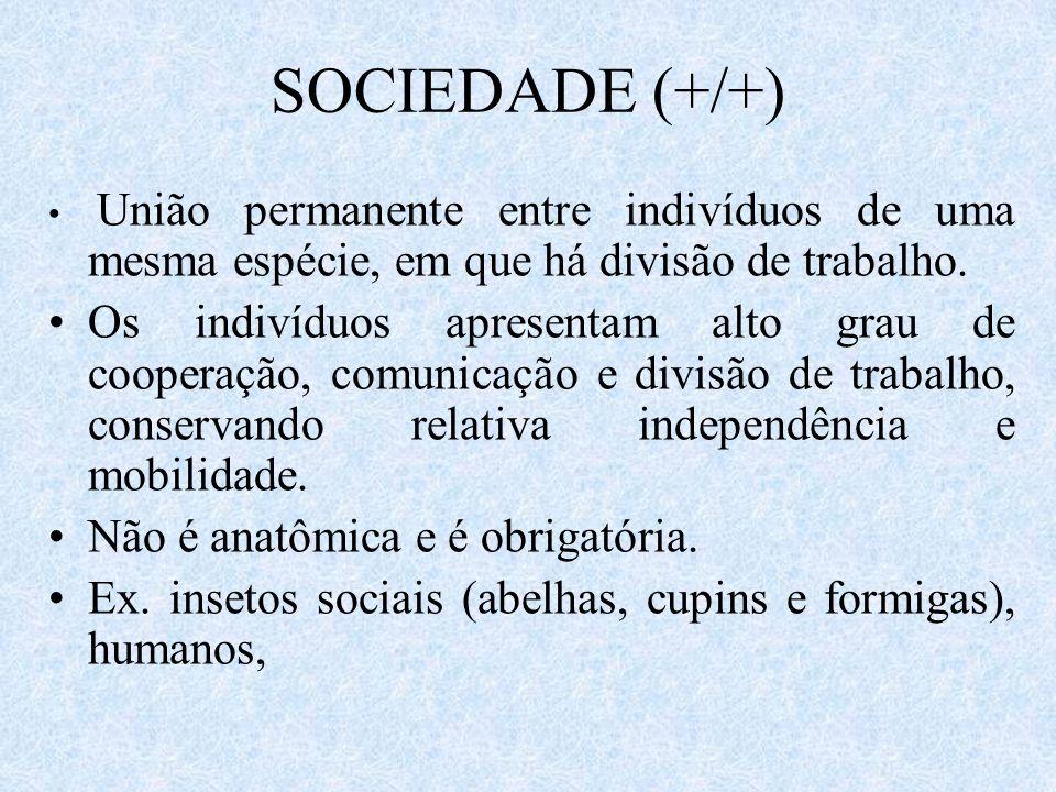 SOCIEDADE (+/+) União permanente entre indivíduos de uma mesma espécie, em que há divisão de trabalho.