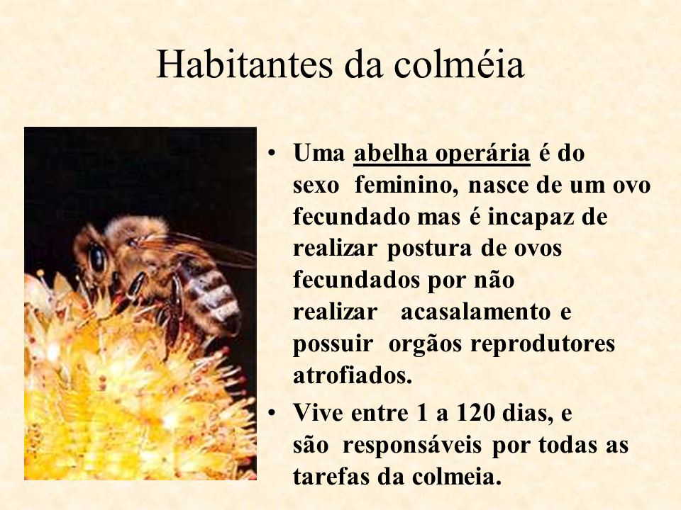 Habitantes da colméia
