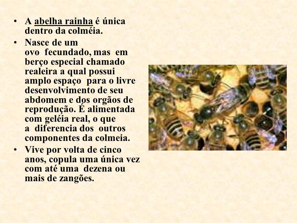 A abelha rainha é única dentro da colméia.