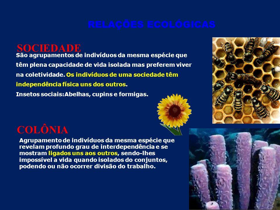 SOCIEDADE COLÔNIA RELAÇÕES ECOLÓGICAS