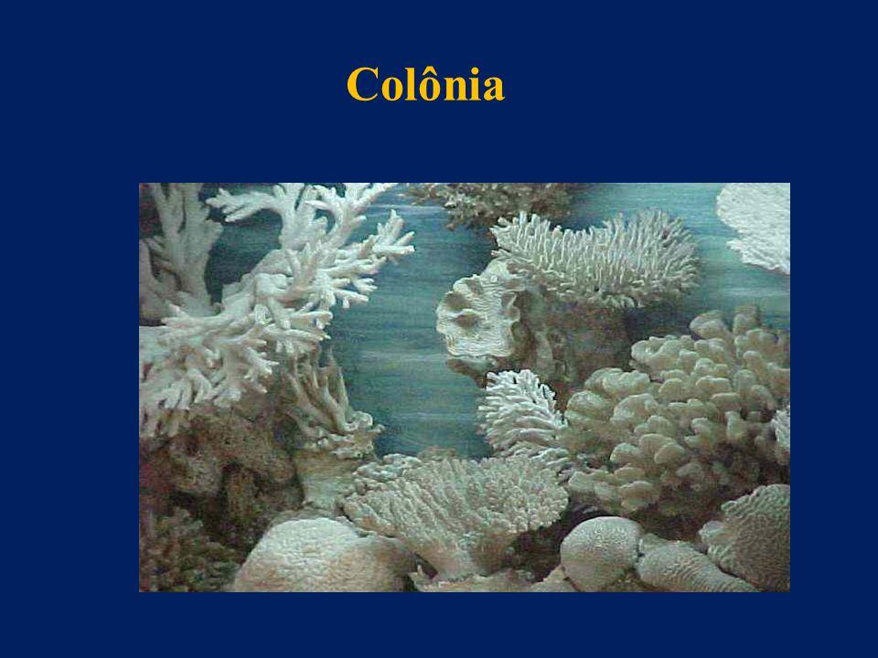 Colônia