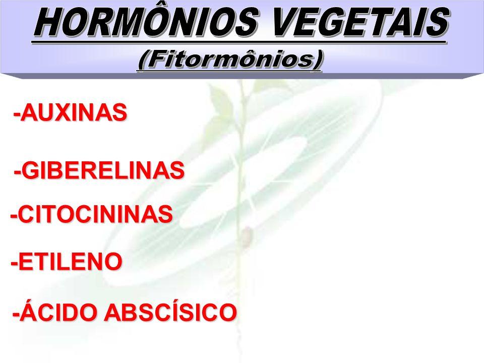 HORMÔNIOS VEGETAIS (Fitormônios) -GIBERELINAS -CITOCININAS -ETILENO