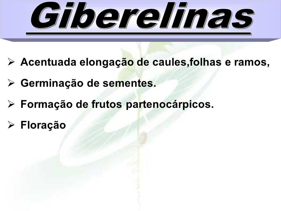 Giberelinas Acentuada elongação de caules,folhas e ramos,
