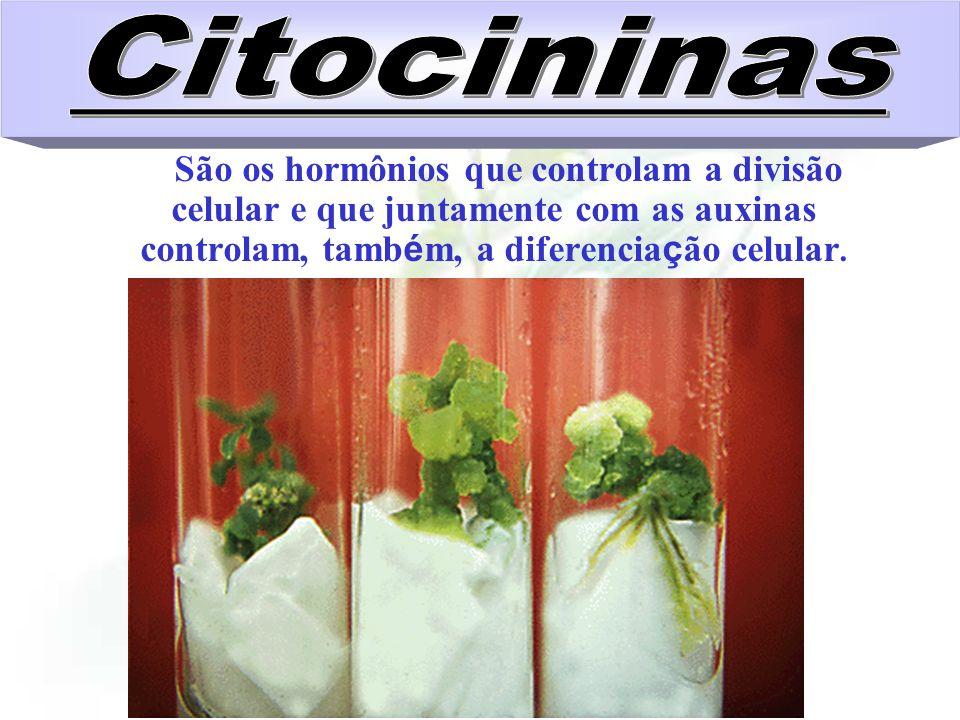 CitocininasSão os hormônios que controlam a divisão celular e que juntamente com as auxinas controlam, também, a diferenciação celular.