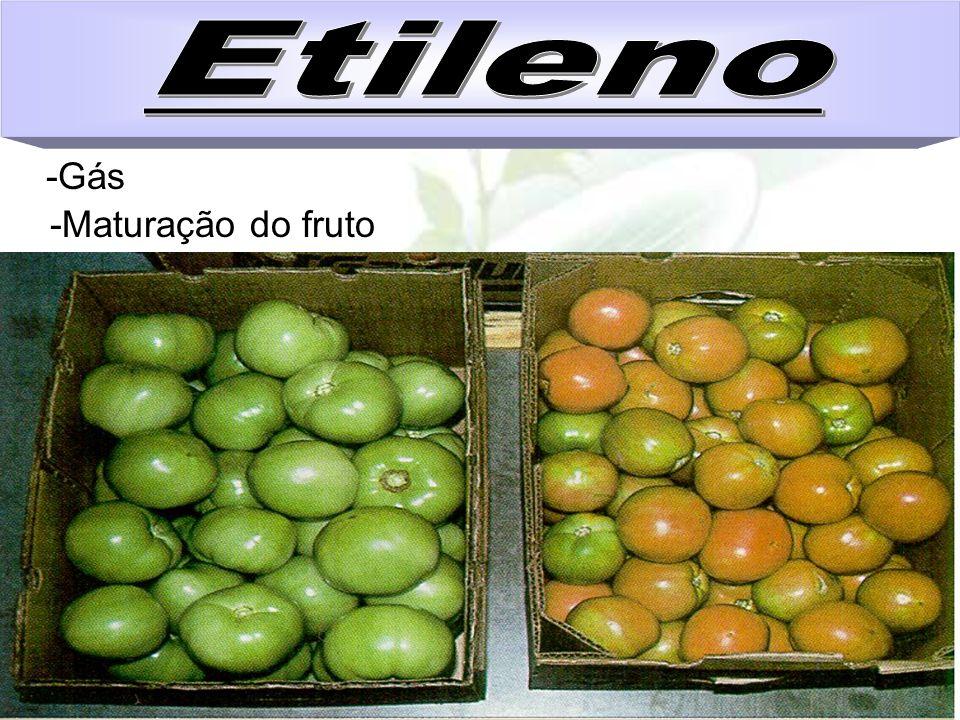 Etileno -Gás -Maturação do fruto