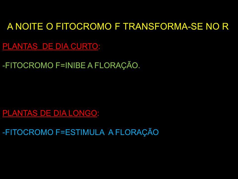 A NOITE O FITOCROMO F TRANSFORMA-SE NO R