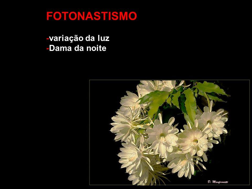 FOTONASTISMO -variação da luz -Dama da noite