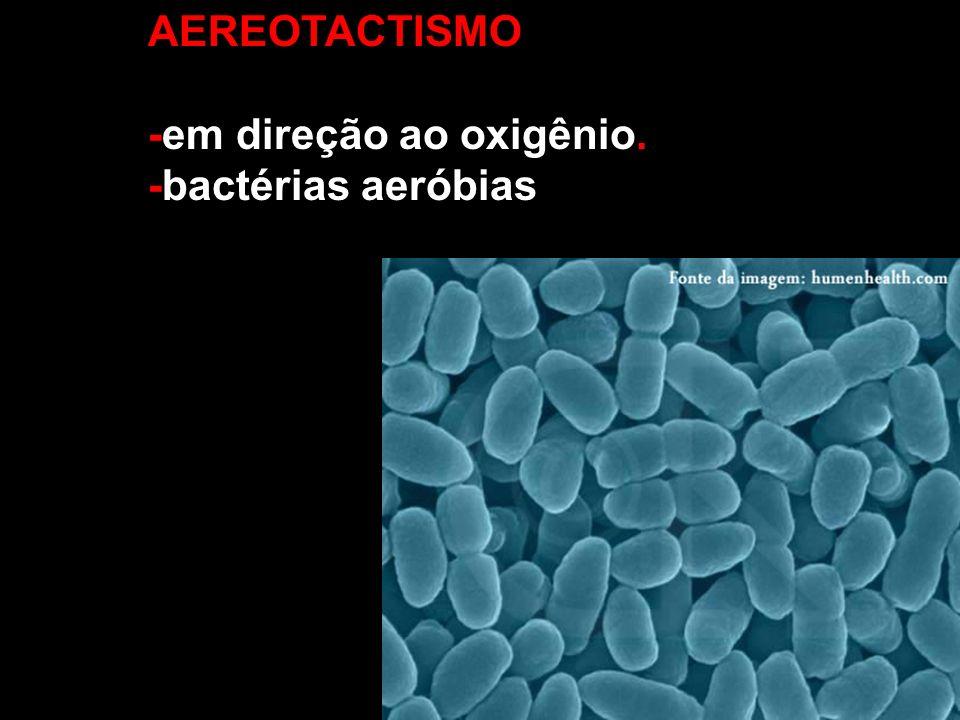 AEREOTACTISMO -em direção ao oxigênio. -bactérias aeróbias