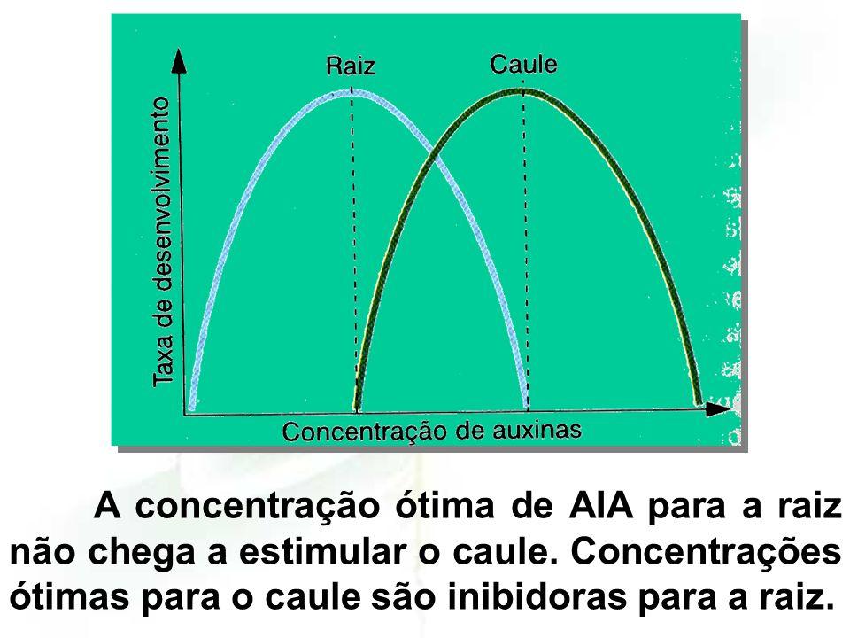 A concentração ótima de AIA para a raiz não chega a estimular o caule