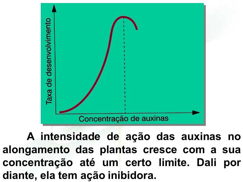 A intensidade de ação das auxinas no alongamento das plantas cresce com a sua concentração até um certo limite.