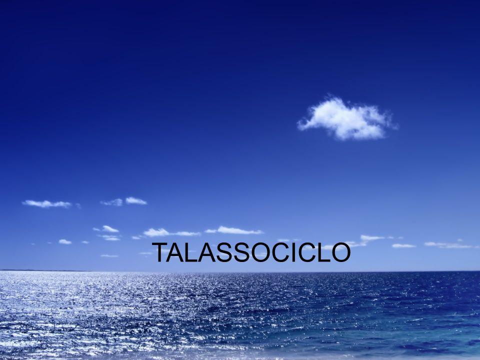 TALASSOCICLO