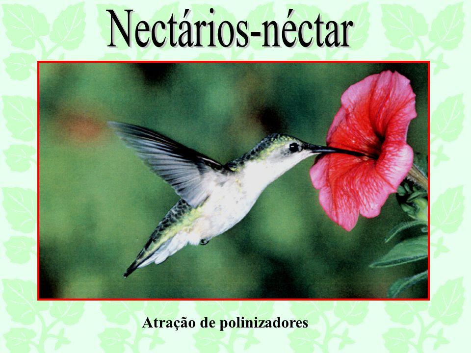Nectários-néctar Atração de polinizadores