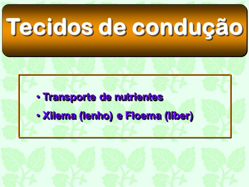 Tecidos de condução Transporte de nutrientes