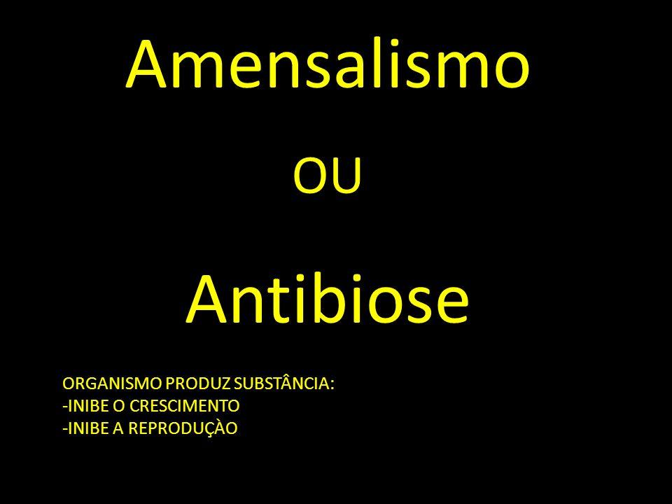 Amensalismo Antibiose OU ORGANISMO PRODUZ SUBSTÂNCIA: