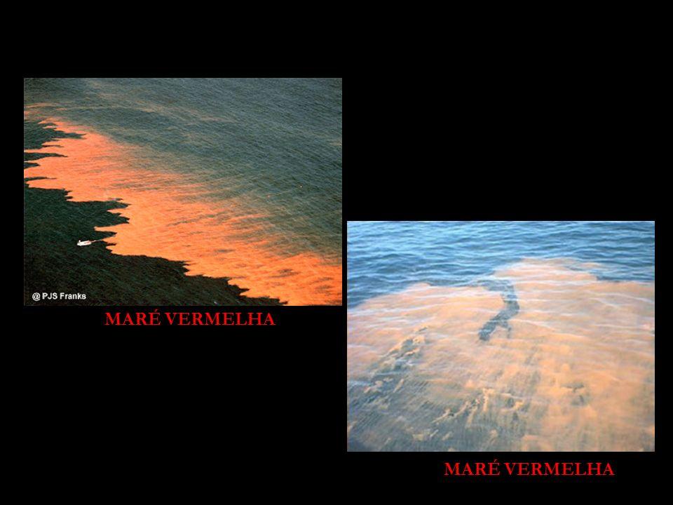 MARÉ VERMELHA MARÉ VERMELHA