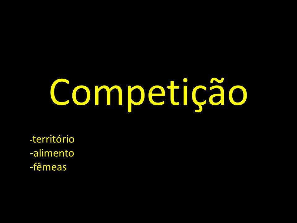 Competição -território -alimento -fêmeas