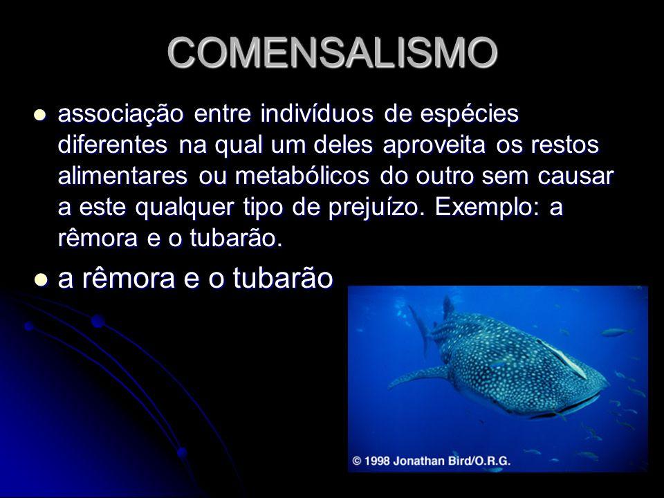 COMENSALISMO a rêmora e o tubarão