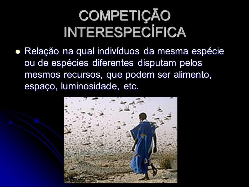 COMPETIÇÃO INTERESPECÍFICA