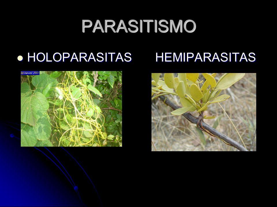 PARASITISMO HOLOPARASITAS HEMIPARASITAS