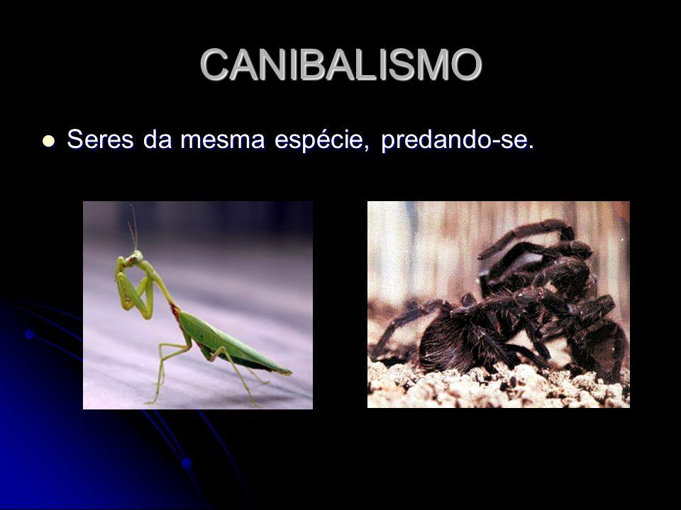 CANIBALISMO Seres da mesma espécie, predando-se.