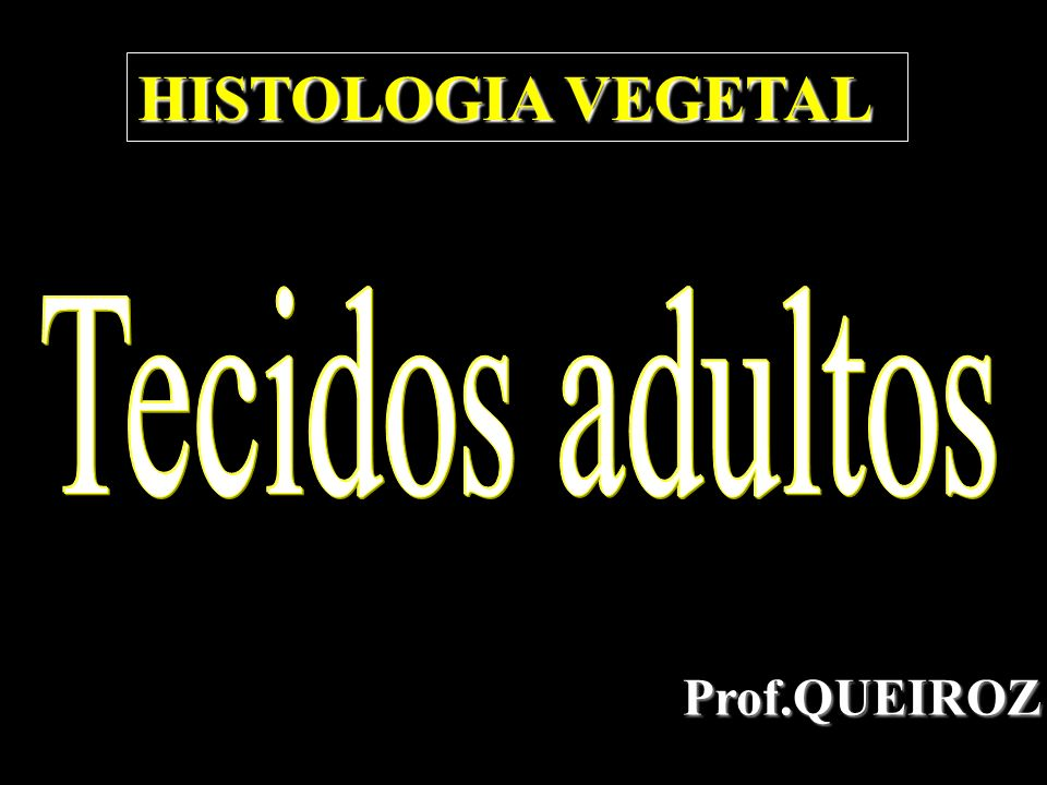 HISTOLOGIA VEGETAL Tecidos adultos Prof.QUEIROZ