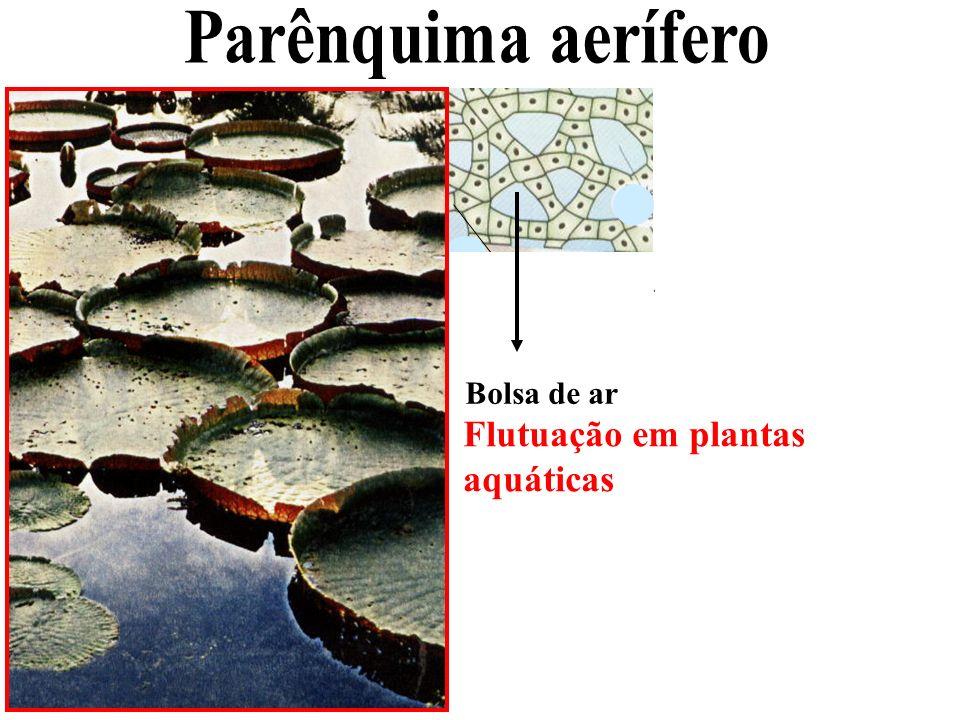 Parênquima aerífero Flutuação em plantas aquáticas Bolsa de ar