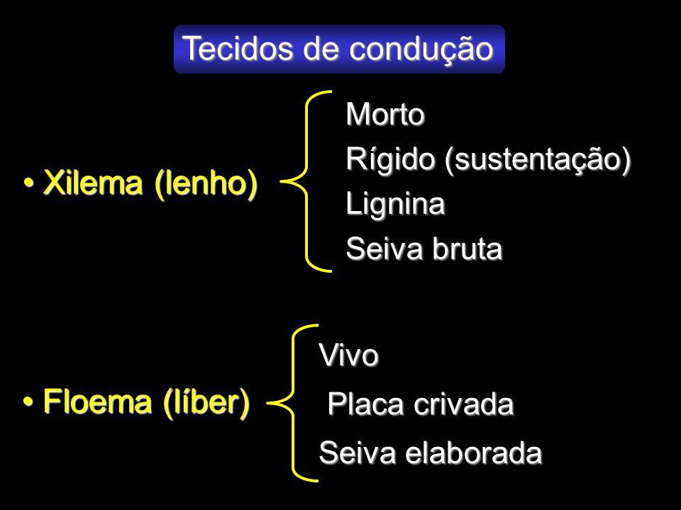 Tecidos de condução Xilema (lenho) Floema (líber) Morto