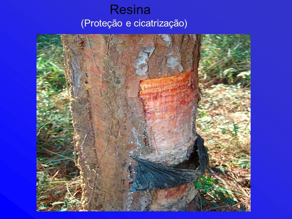 Resina (Proteção e cicatrização)
