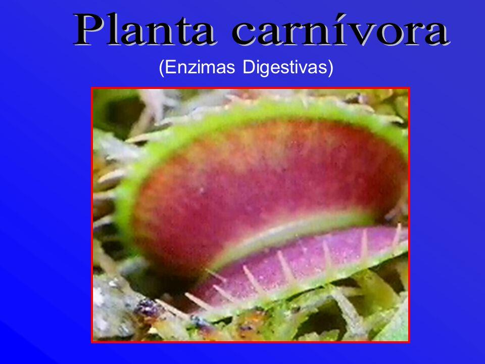 Planta carnívora (Enzimas Digestivas)