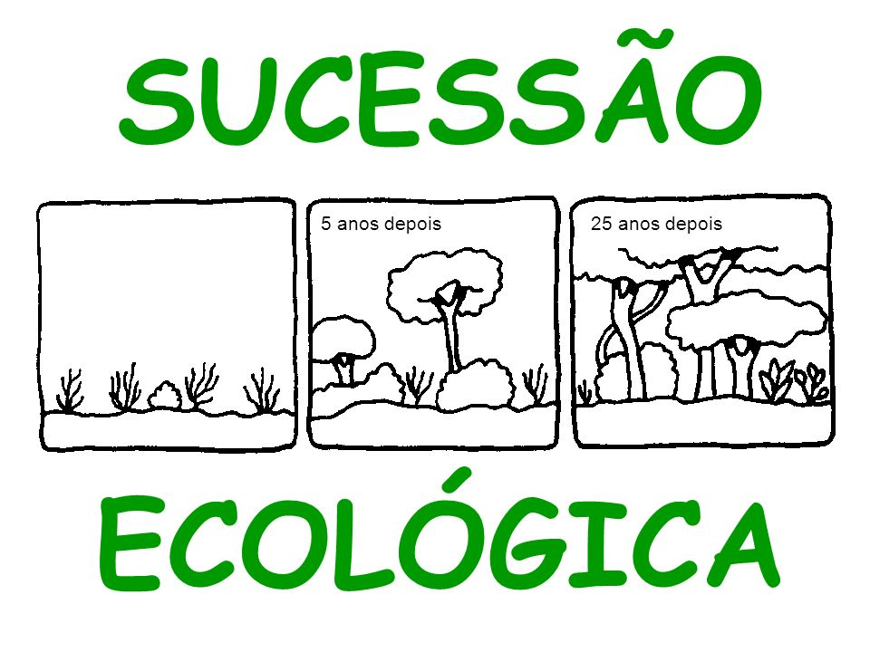 SUCESSÃO ECOLÓGICA 5 anos depois 25 anos depois