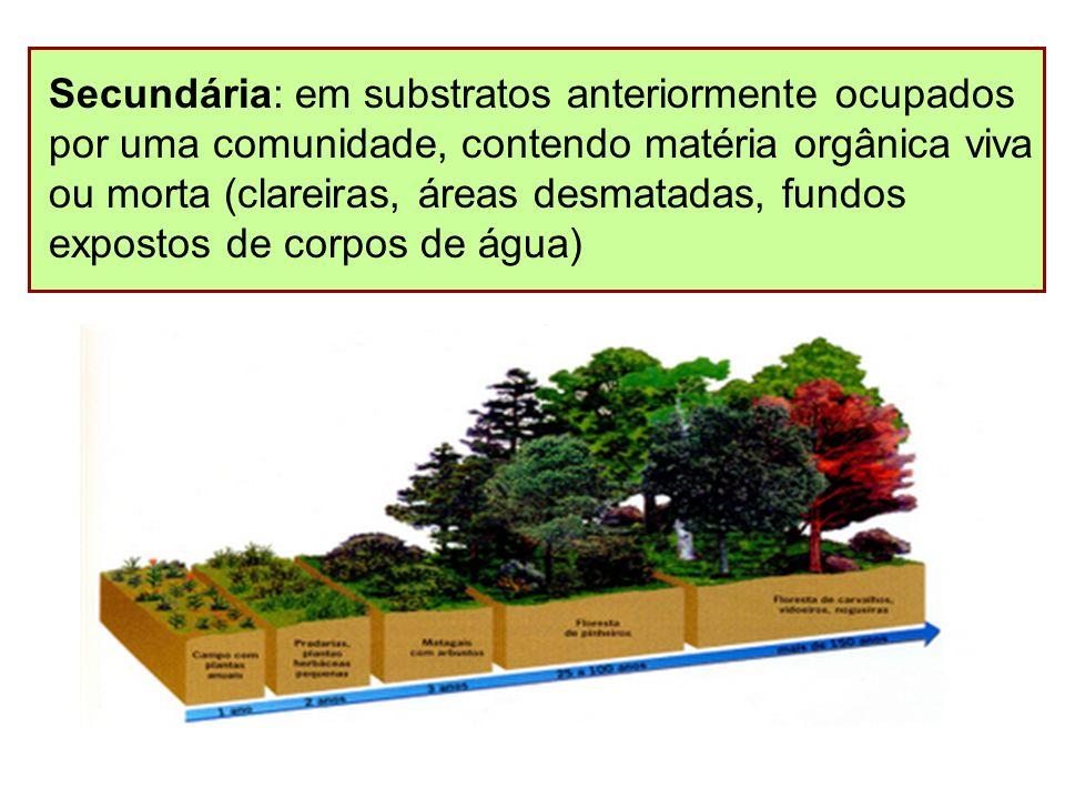 Secundária: em substratos anteriormente ocupados