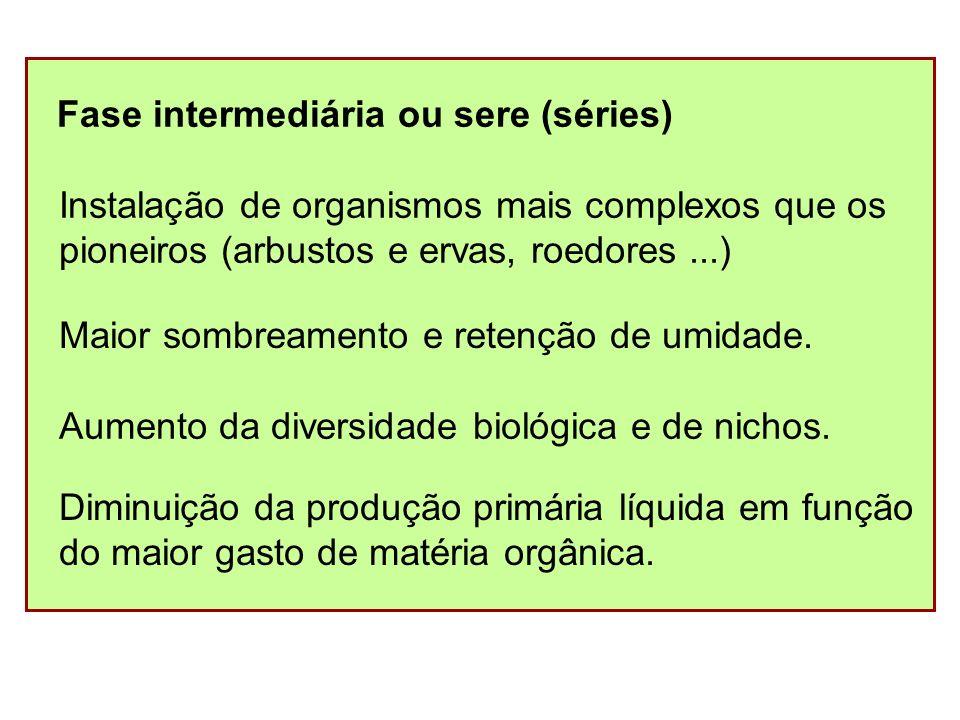 Fase intermediária ou sere (séries)