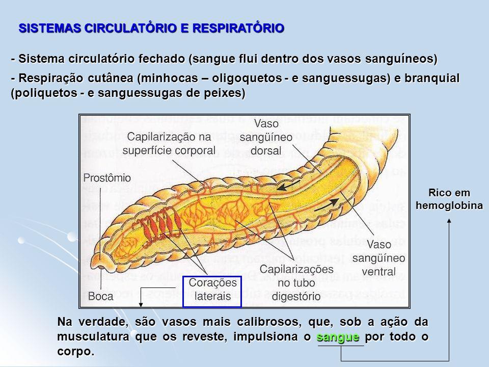 SISTEMAS CIRCULATÓRIO E RESPIRATÓRIO