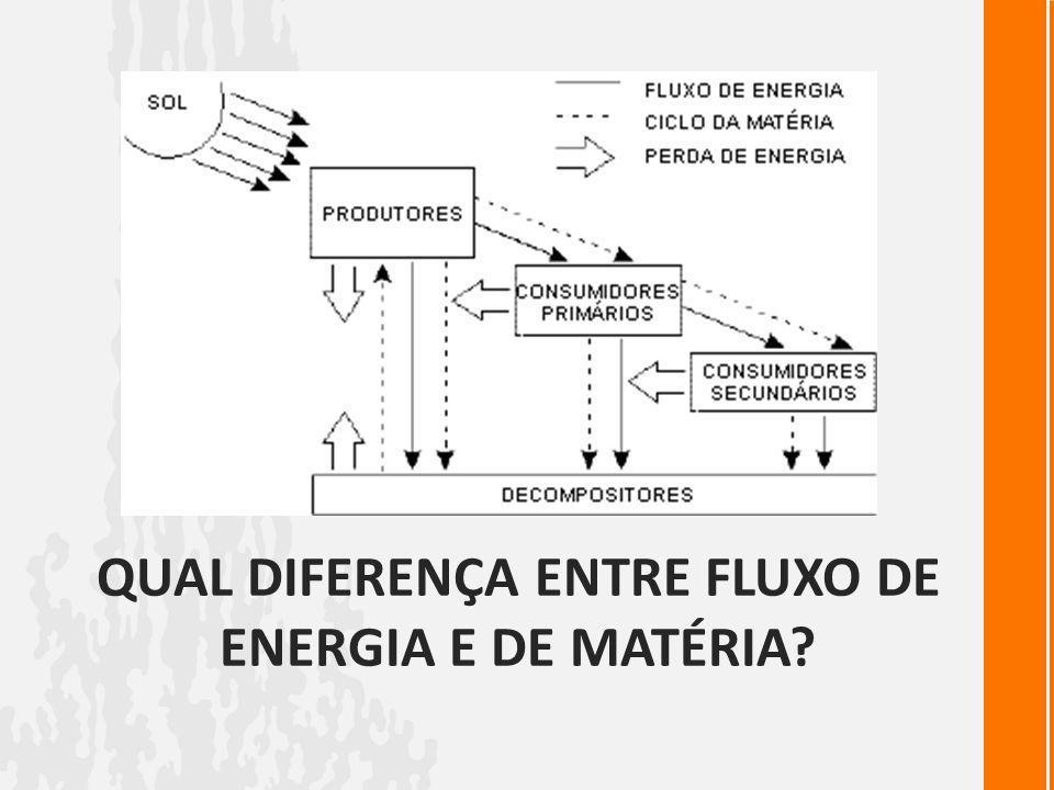 Qual diferença entre fluxo de energia e de matéria
