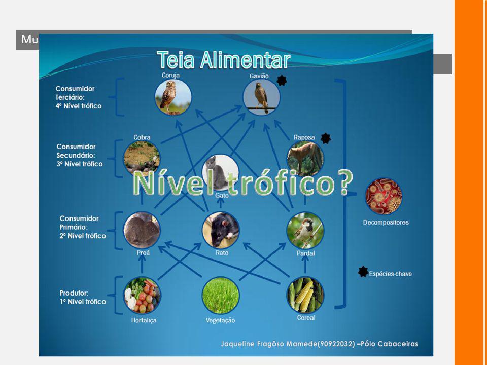 Teia alimentar – cadeias inter-relacionadas