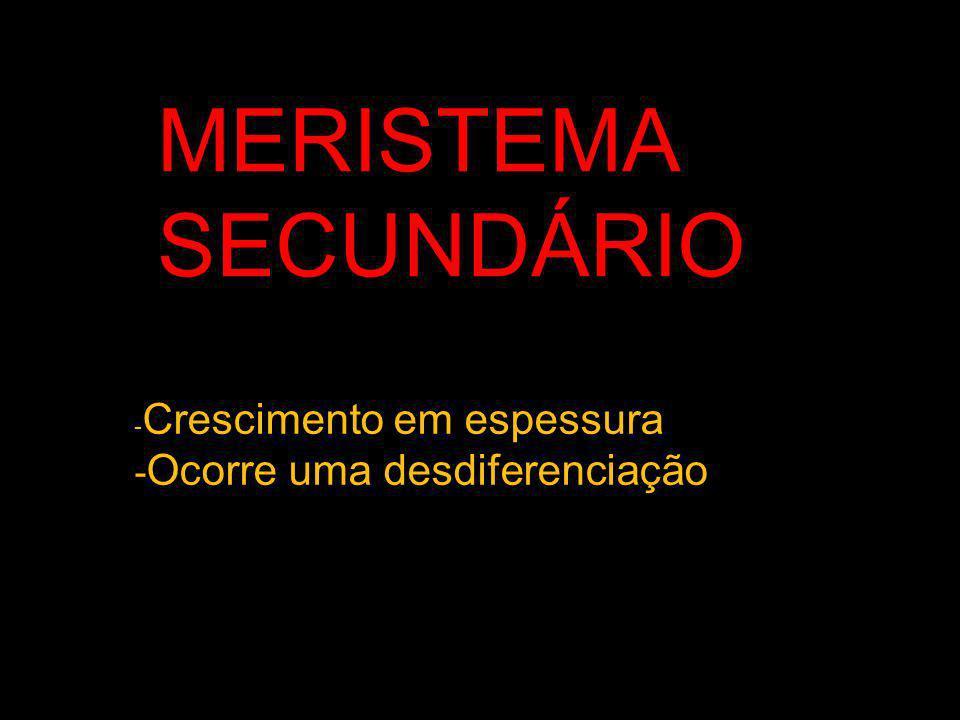 MERISTEMA SECUNDÁRIO -Ocorre uma desdiferenciação