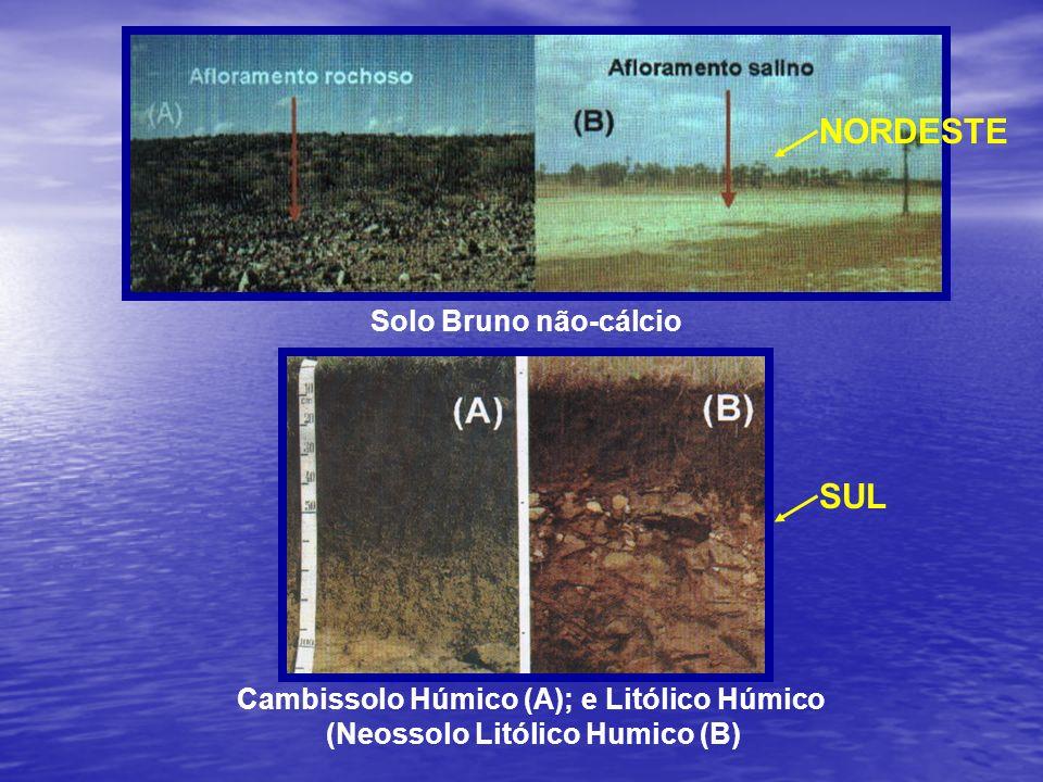 Cambissolo Húmico (A); e Litólico Húmico (Neossolo Litólico Humico (B)