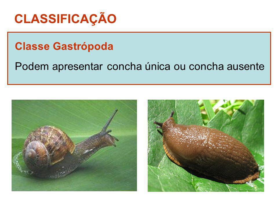 CLASSIFICAÇÃO Classe Gastrópoda
