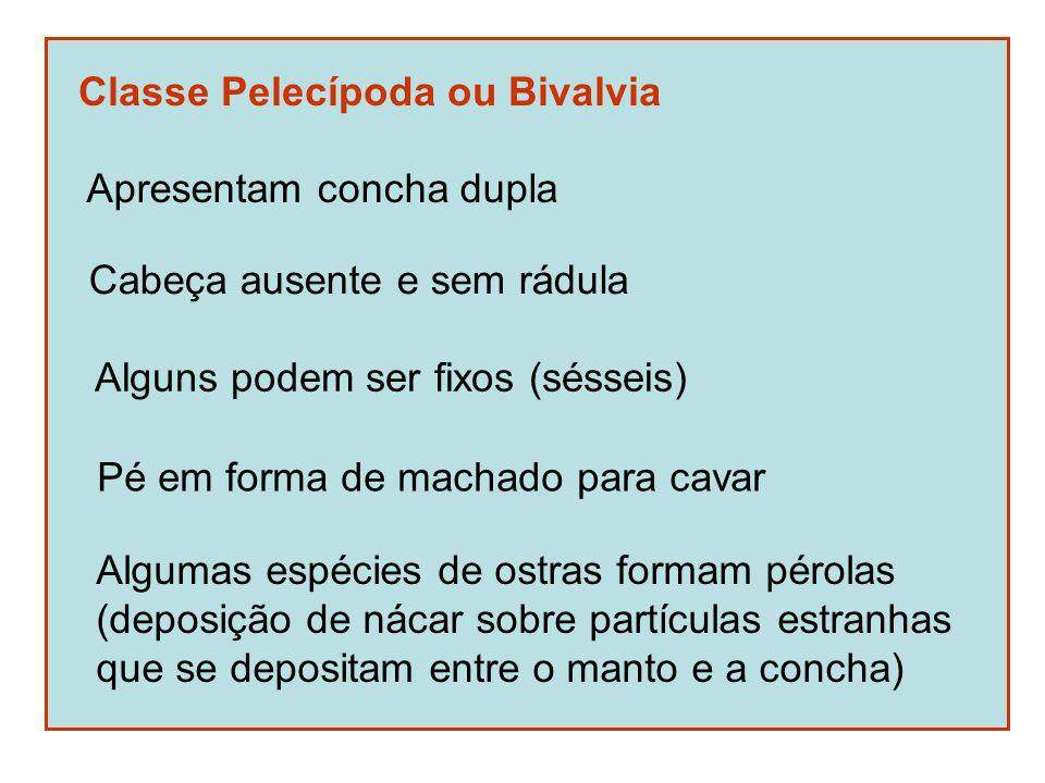 Classe Pelecípoda ou Bivalvia