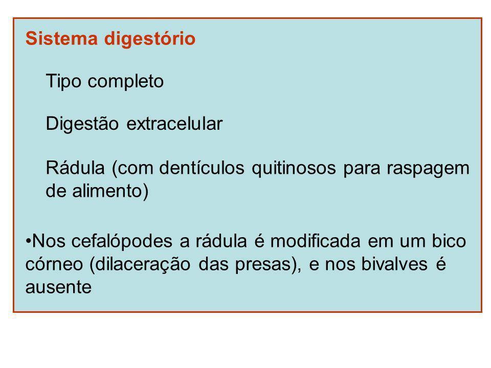 Sistema digestório Tipo completo. Digestão extracelular. Rádula (com dentículos quitinosos para raspagem.