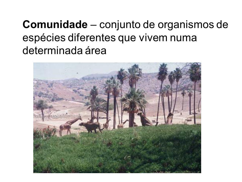 Comunidade – conjunto de organismos de