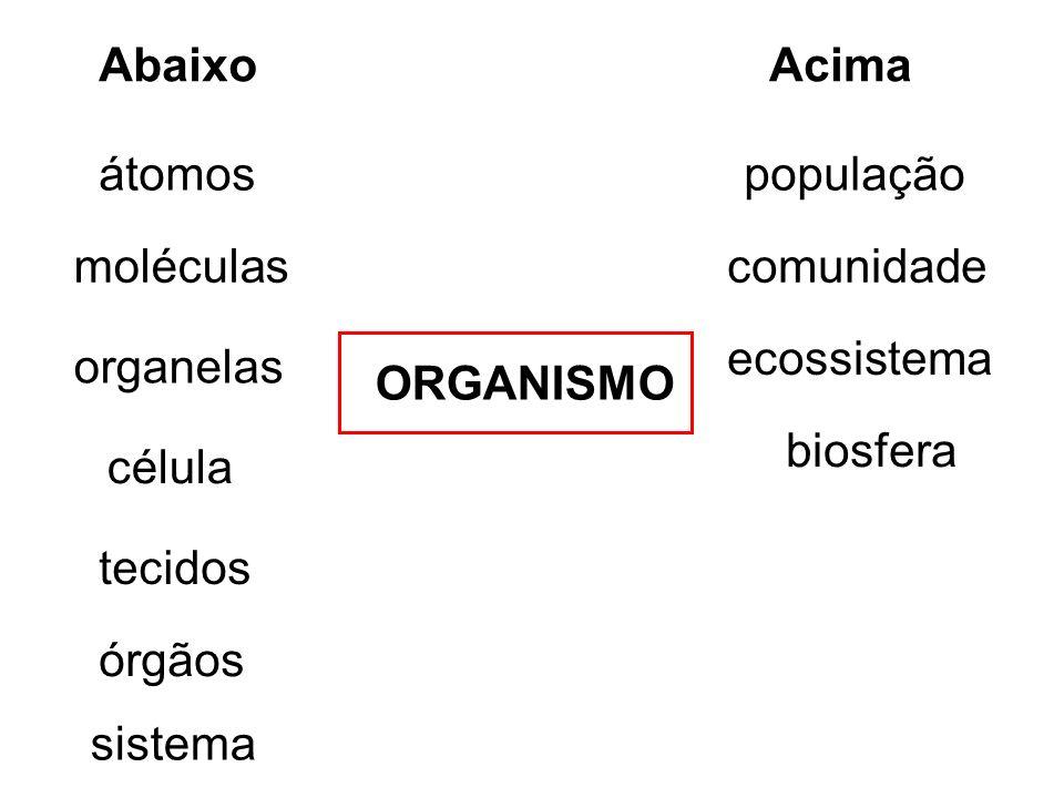 Abaixo Acima. átomos. população. moléculas. comunidade. ecossistema. organelas. ORGANISMO. biosfera.