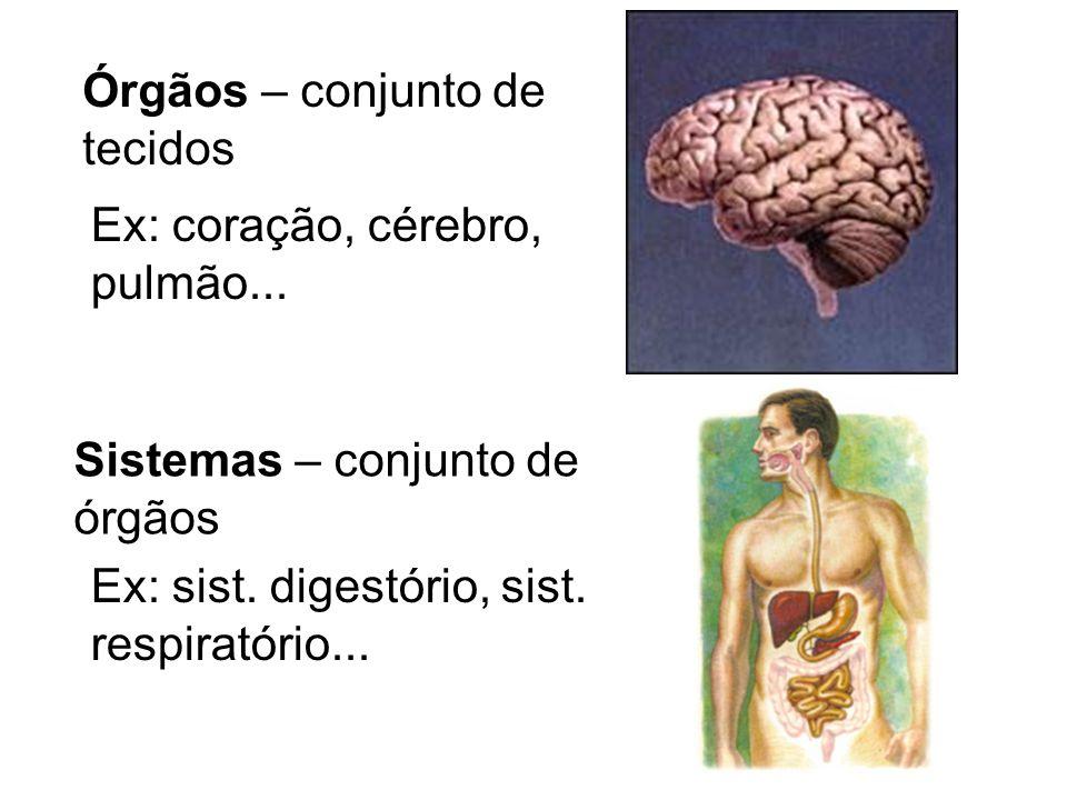 Órgãos – conjunto de tecidos. Ex: coração, cérebro, pulmão... Sistemas – conjunto de. órgãos. Ex: sist. digestório, sist.