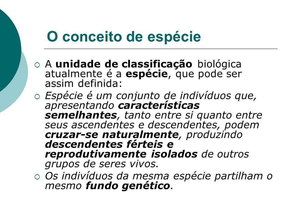 O conceito de espécie A unidade de classificação biológica atualmente é a espécie, que pode ser assim definida: