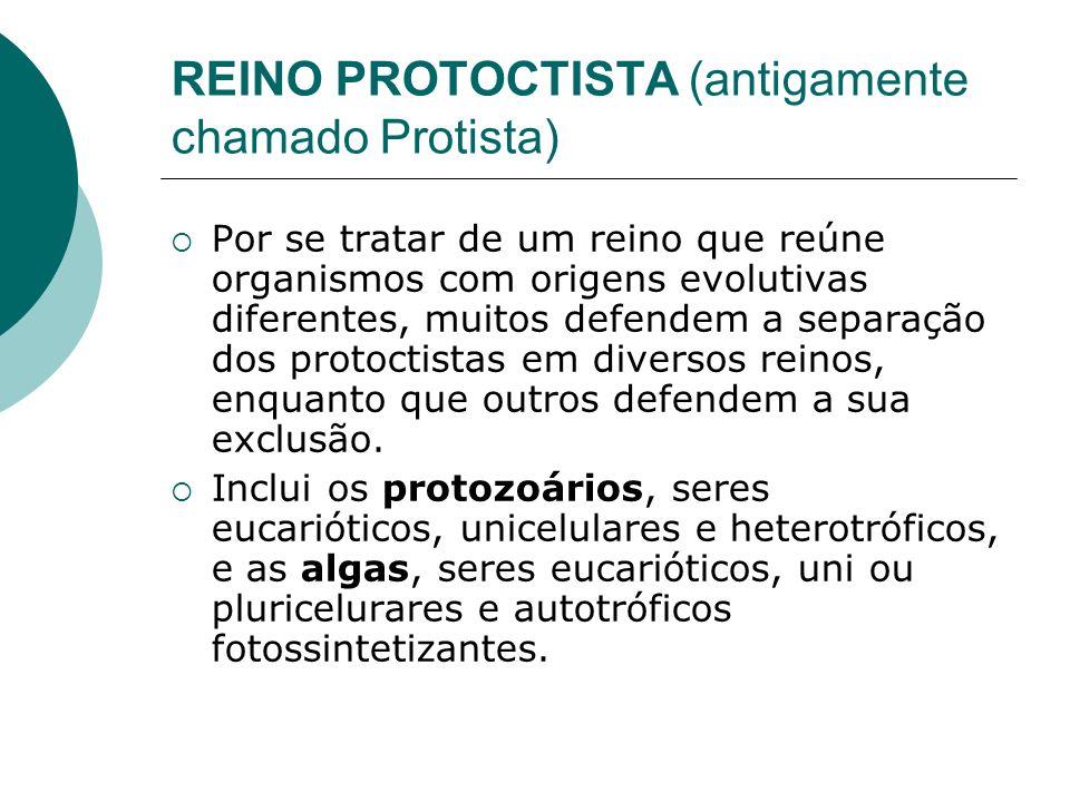 REINO PROTOCTISTA (antigamente chamado Protista)