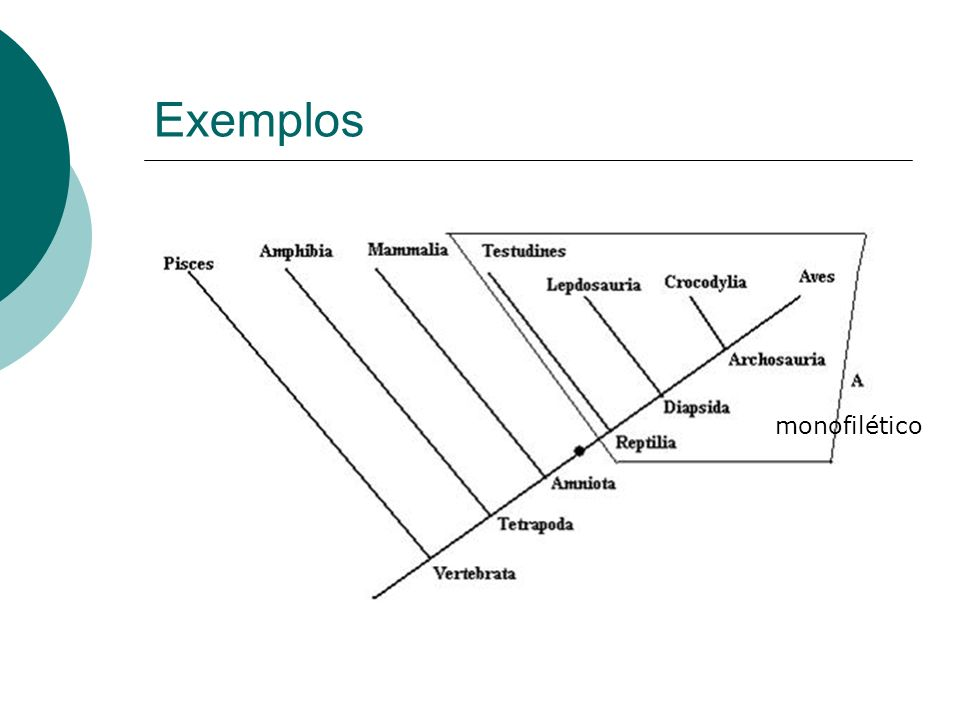 Exemplos monofilético